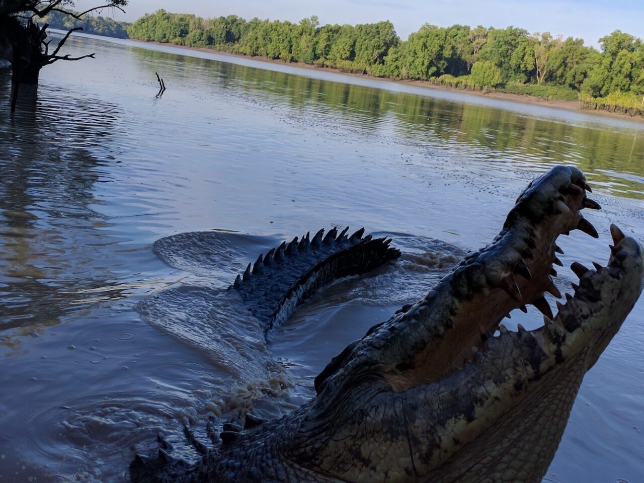 Croc or River Serpent