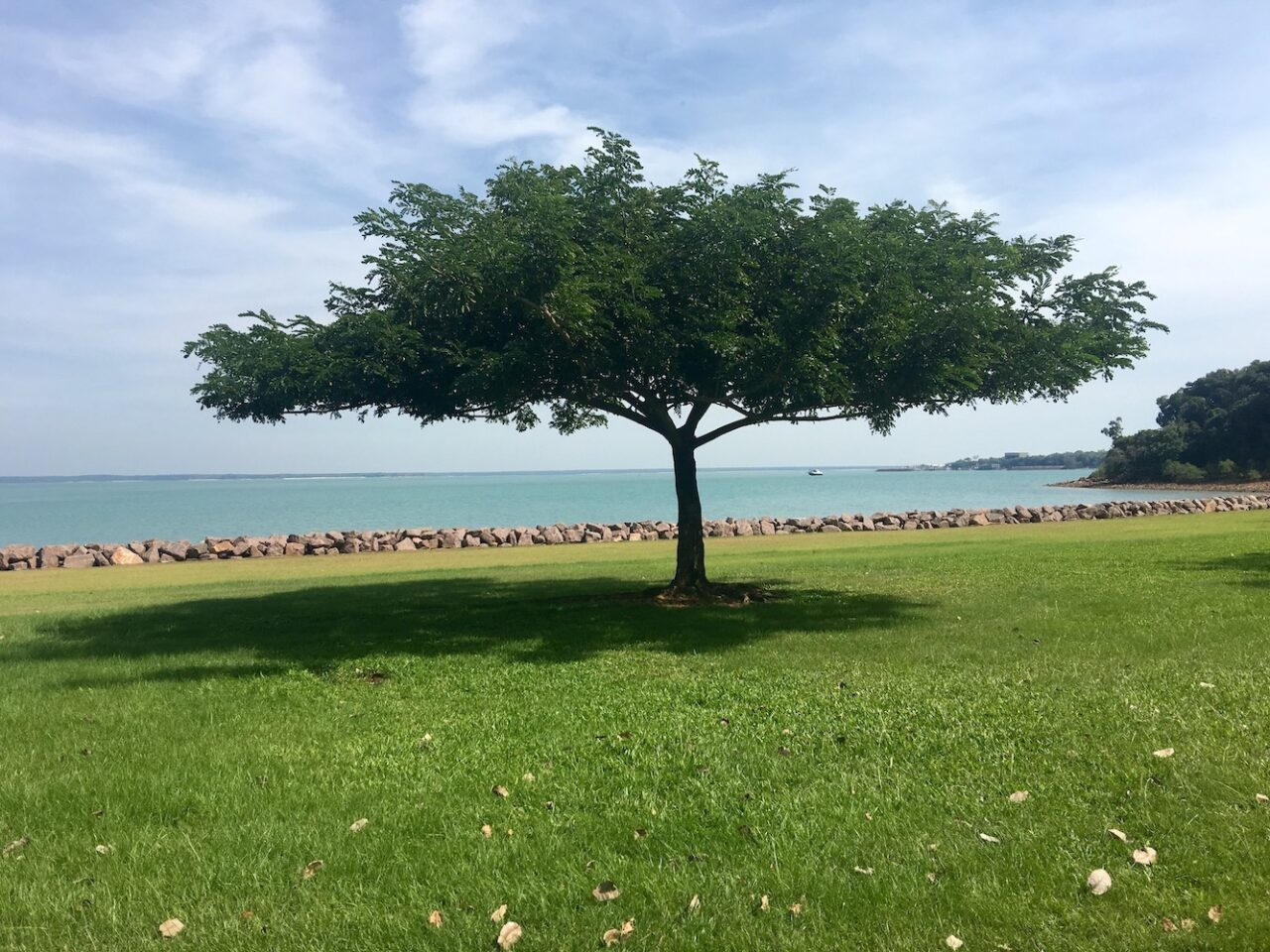 Shade in Darwin – always welcome