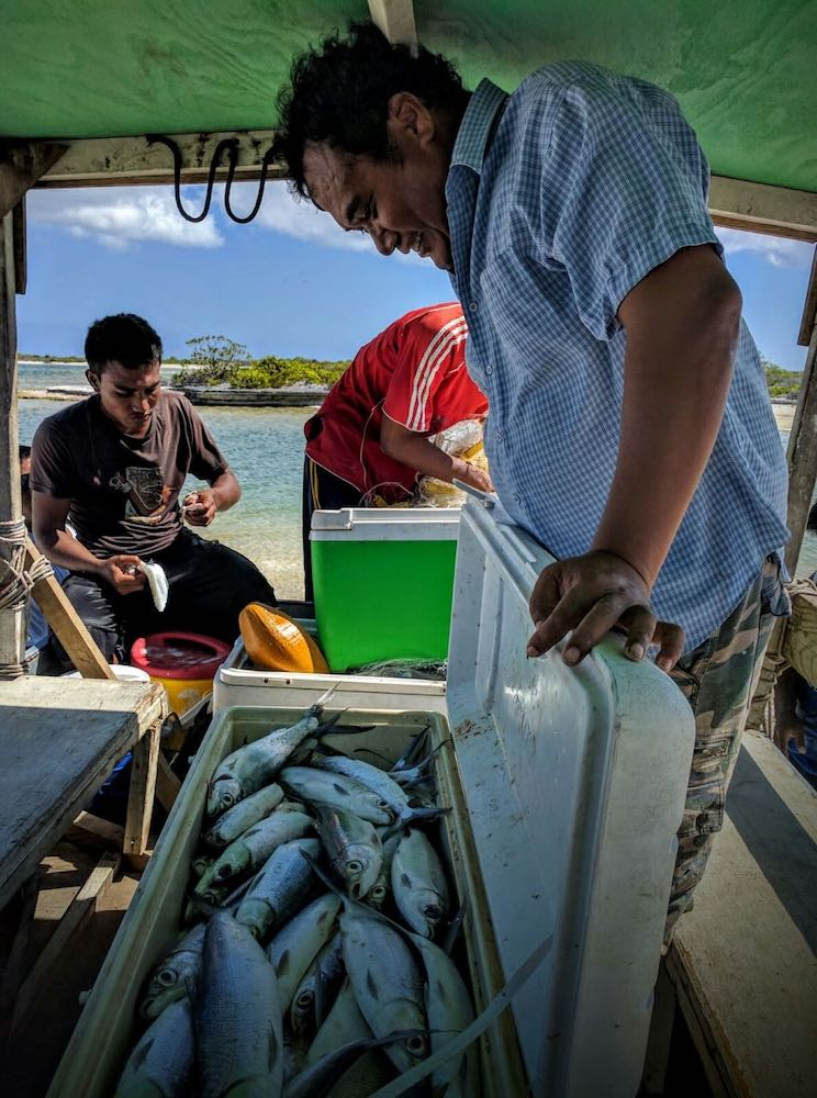 D – Big Catch – Milk Fish hopping into the cooler